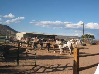 tamaya-stables