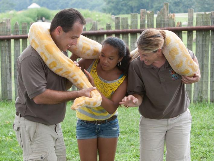 61714-SORA-albino-burmese-python-original