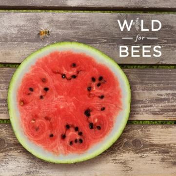 62068-WFB-FB-watermelon-original