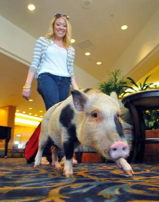 Florida's Space Coast pet-friendly hotels